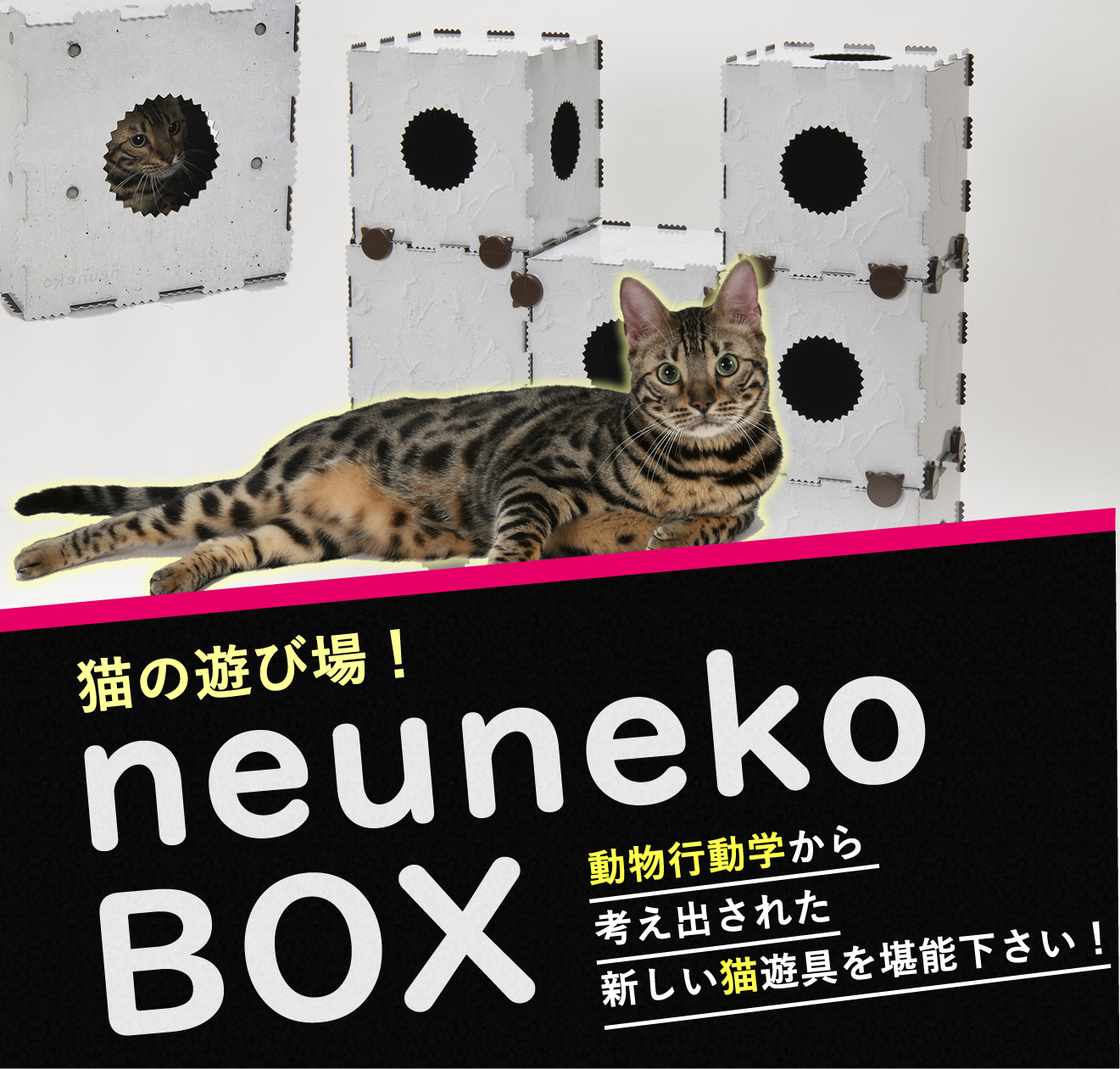 猫の遊び場 neunekoBOX